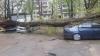 Ужасающие фотографии: Дерево упало на несколько машин, припаркованных во дворе