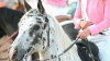 В Татарстане школьница умерла после падения с лошади