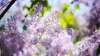 По народному поверью, цветы, высаженные в Вербное воскресенье, будут особенно красивы