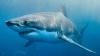 В Австралии моряки прогнали акулу с помощью швабры