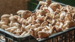 Россиянин распространял галлюциногенные грибы по почте