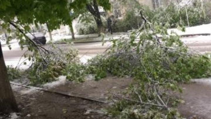 Апрельский снегопад: упало 46 деревьев, повреждены 7 машин
