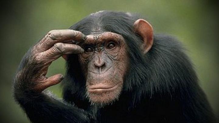 Составлен рейтинг самых умных диких и домашних животных