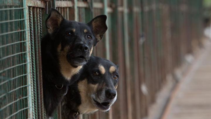 Зоозащитники в Перми требуют закрыть приют, ставший кровавым адом для бездомных собак