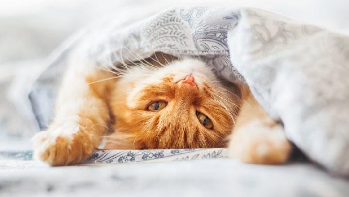 Жадный кот с батоном хлеба стал звездой интернета