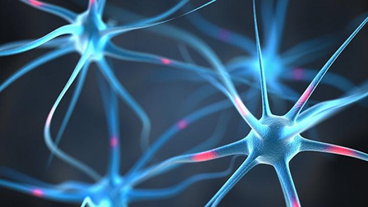 Учёные нашли в периферической нервной системе «мини-мозги», отвечающие за боль