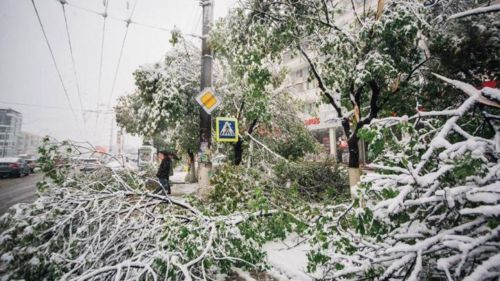 Апрельский снегопад в Молдове: масштаб последствий