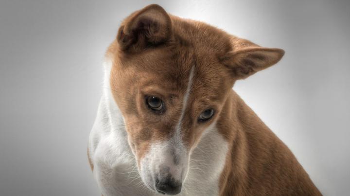 Учёные объяснили, почему собаки извиняются перед хозяевами