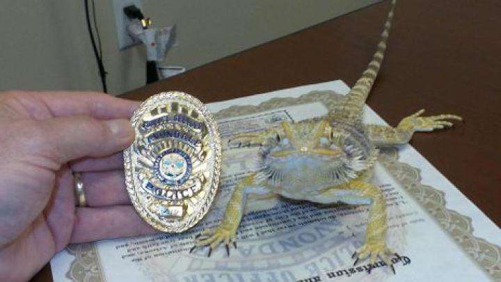 Ящерица стала сотрудником полиции в США