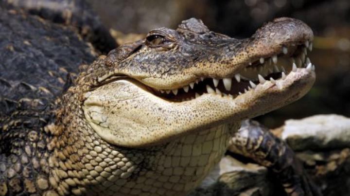 Видео: Аллигатор пробрался в частный дом в Южной Каролине