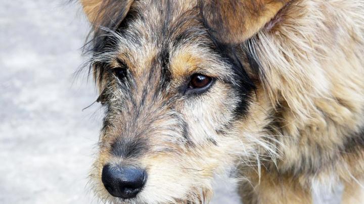 Всех бездомных животных в Анадыре уничтожат из-за угрозы бешенства