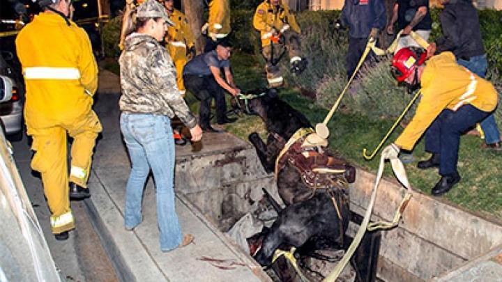 Американские пожарные спасли провалившуюся под землю лошадь