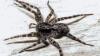 Женщина пожаловалась врачу на головные боли, и он вытащил из её уха паука