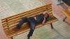 Во Франции бездомный прожил четыре дня в пятизвездочном отеле