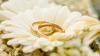 В Австралии молодой человек спрятал кольцо в кулон девушки за год до предложения