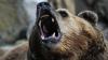 Велосипедист снял на видео медведя, погнавшегося за его товарищем