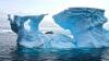 Названа дата начала транспортировки айсбергов из Антарктиды в ОАЭ
