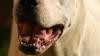 Вылезший из-под стола пес сорвал выпуск новостей и напугал журналистку