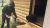 Трехмесячного медвежонка спасли от гибели под Нижним Новгородом