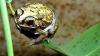 Потерявшийся в джунглях Малайзии пенсионер выжил, неделю питаясь лягушками