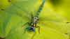 """Ученые: самки стрекоз притворяются мертвыми, чтобы избавится от назойливых """"поклонников"""""""