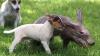 Спасенный трубкозуб обрел новых друзей в лице восьми собак