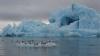 Эмираты решили возить питьевую воду из Антарктиды