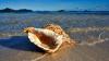 Инженеры воссоздали уникальную ударопрочную структуру морских раковин