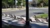 Пример для подражания: дикие утки восхитили дисциплиной на дороге