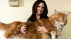 Самый крупный в мире кот по кличке Омар завоевал Сеть