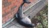 Ирландские студенты отплясывали на вечеринке с мёртвым дельфином