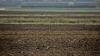Фермеры, которые пострадали от заморозков 2016 года, получат компенсации