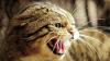 У кошек бывает аллергия на хозяина
