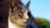 Злоумышленник побрил семь котов в американском городе