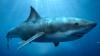 Видео: Акула выбесила рыбака, вцепившись в его сеть как собака