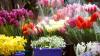 На последний звонок большим спросом у продавцов пользуются цветы