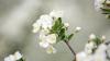 Садоводы опрыскивают сады, чтобы предотвратить распространение инфекций
