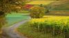 В результате апрельских снегопадов пострадало 34,5 тысячи га сельхозугодий