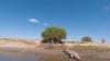 В Австралии рыбаки дразнили крокодила и едва не поплатились за это