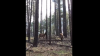 В Аризоне лосиха отбила детеныша у медведя