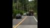 В Таиланде банды слонов грабят грузовики с фруктами