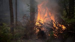 В Красноярском крае загорелся второй за день поселок