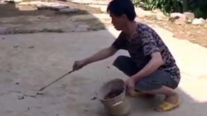 Тысячи многоножек наводнили китайские деревни