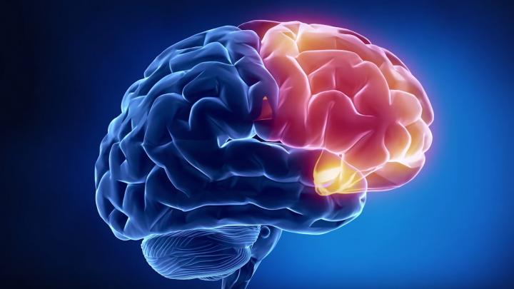 Ученые узнали, как регулируется кровоток в мозге