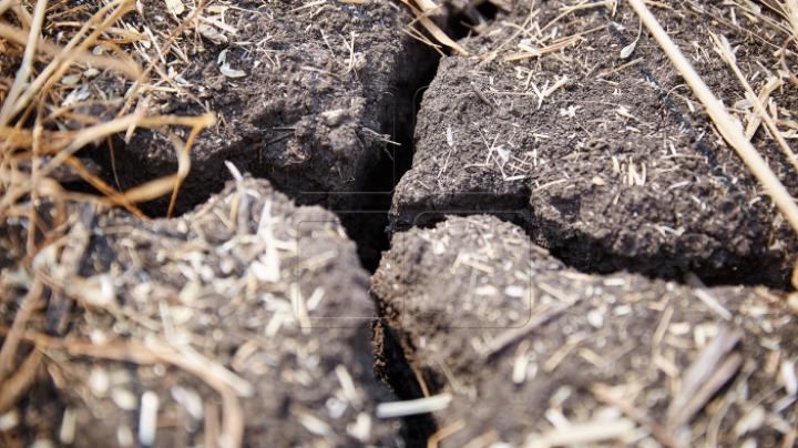 Гидрометеорологическая служба предлагает фермерам услугу по замерам влажности почвы