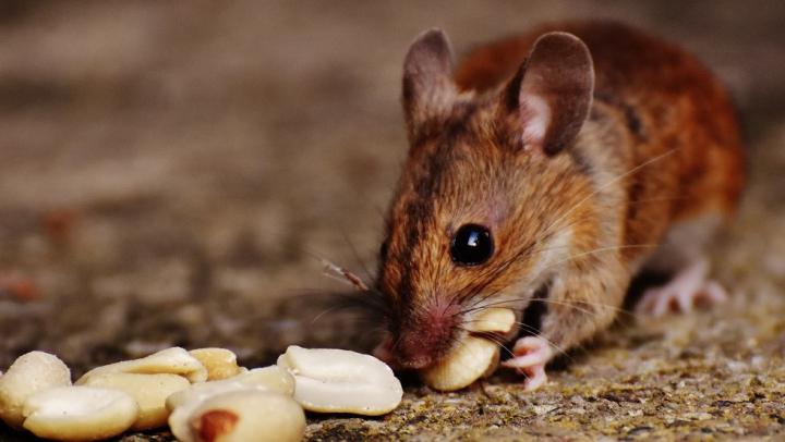 На украинской таможне уверяют, что мыши съели 2 тонны конфискованных орехов