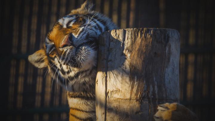 В США судят владельцев заповедника, убивших 11 диких зверей
