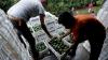 Калифорнийские работники украли авокадо на сумму $300 тысяч