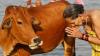 Премьер Индии осудил убийства людей «во имя защиты коров»