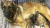 В Воронежской области дети отбили у живодёра щенков